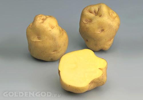 Самый дорогой в мире картофель